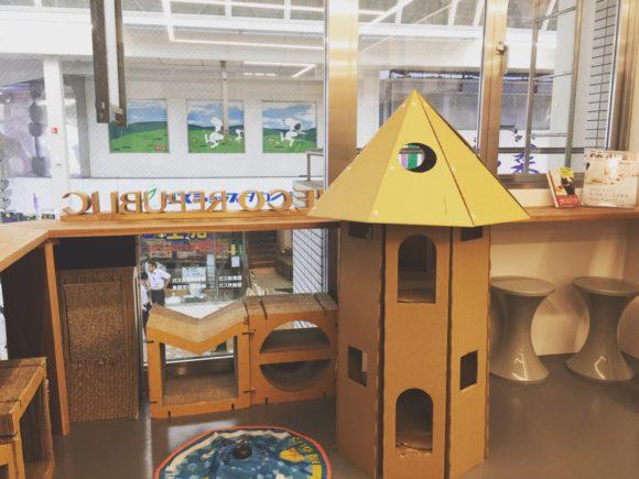 写真:「保護猫カフェ ネコリパブリック広島」のカウンター席