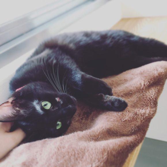 写真:「保護猫カフェ ネコリパブリック広島」の黒猫